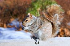 Free Squirrel And The Crust Of Loaf Stock Image - 5587231
