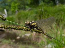 Free Dragonfly 7 Stock Images - 5587904