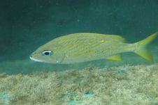 Free Aquatic Animal Stock Photos - 5587913