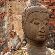 Free The Monkey And Buddha Stock Photo - 5588030