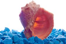 Free A Seashell On Blue Rocks Isolated On White Royalty Free Stock Images - 5588849