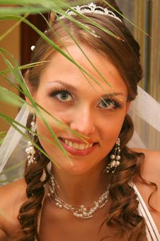 Free Bride In Wedding Dress Stock Photos - 5589573