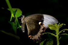 Free Big Butterfly Royalty Free Stock Photography - 5589697