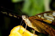 Free Butterfly On An Orange Stock Photography - 5589712