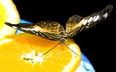 Free Butterfly On An Orange Royalty Free Stock Images - 5589939