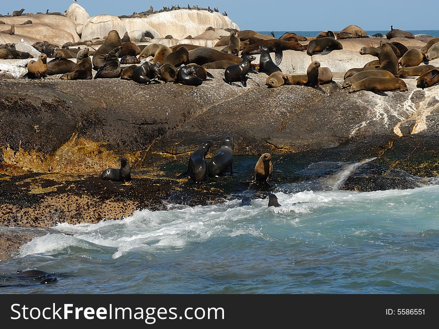 Seal Island, South Africa