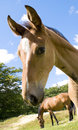 Free A Curious Foal Is Looking In To The Camera Stock Images - 5591104