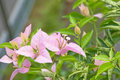 Free Pink Flower Stock Photography - 5592072