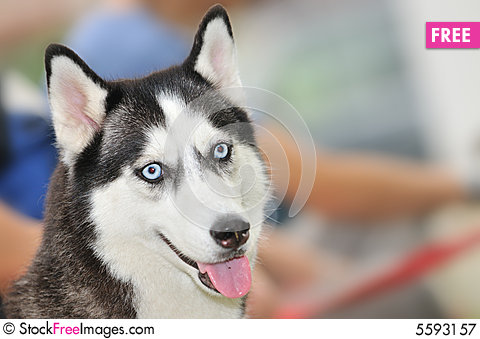 Free Pet Competition Series 7 Royalty Free Stock Photography - 5593157