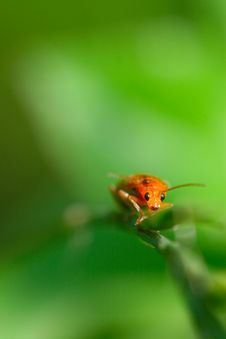 Free Bug On The Plant Royalty Free Stock Photography - 5590097