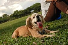 Free Happy Dog At Field Stock Images - 5590184
