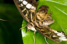 Free Butterfly Stock Image - 5590201