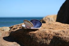 Free Seashell Stock Image - 5590481