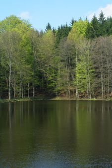Free Spring Scenery Stock Photography - 5590822