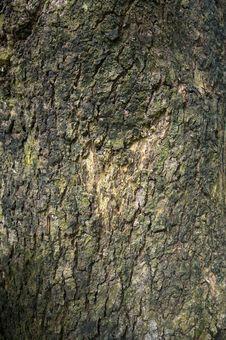 Free Stock Photo: Wood Texture Royalty Free Stock Image - 5590826