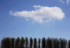 Free Trees Stock Photo - 5590870