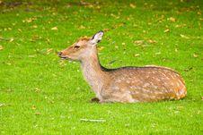 Free Young Deer Stock Photos - 5591523