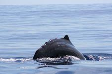 Free Ocean Giant Stock Photos - 5593393