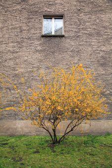 Free Berlin Window With Tree Stock Photography - 5593422