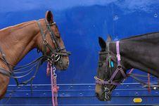 Free Horses Resting Stock Image - 5594061