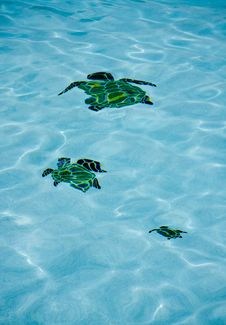 Pool Turtles Stock Photos