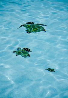 Free Pool Turtles Stock Photos - 5594313