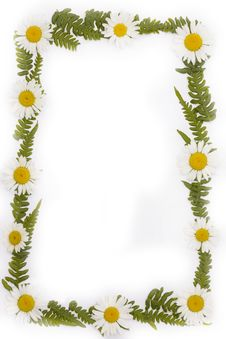 Free Frame From Leaf And Daisy Stock Photos - 5594373