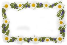 Frame From Leaf And Daisy Stock Images