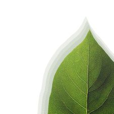 Free Green Leaf Composite Stock Photos - 5594733