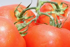Free Tomatoes Stock Image - 5594871