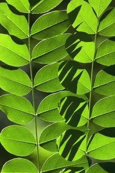 Free Leaf Array Stock Photo - 5594920