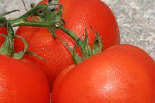 Free Tomatoes Stock Photo - 5595010