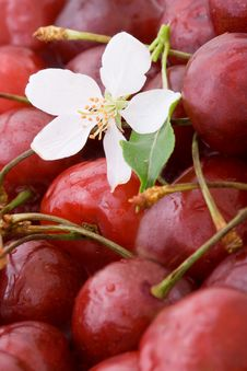 Free Closeup Sweet Cherries Background Stock Photos - 5596513
