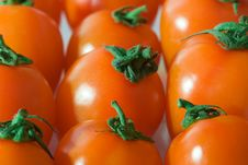 Group Of Red Tomatoes Stock Images
