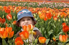 Free Little Boy In Tulips Royalty Free Stock Image - 5597446