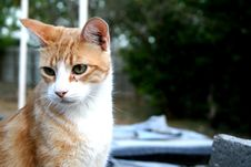 Free Orange Cat Stock Image - 5598191
