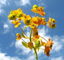 Free Flower On Sky Royalty Free Stock Images - 5598329