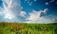 Free Green Field With  Poppies Royalty Free Stock Photography - 5598817