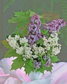 Free Bouquet Stock Photo - 5598920