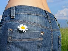 Flower In The Pocket Royalty Free Stock Image