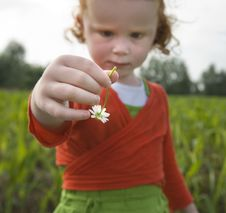 Free Little Gilr Holding Flower Royalty Free Stock Photography - 5599597