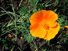 Free Orange Flower Stock Photography - 5599612