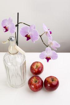 Free Still Nature Stock Photography - 5599902