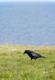 Free Black Bird Stock Photography - 5599942