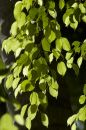 Free Leaves1 Royalty Free Stock Images - 565869