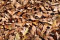 Free Brown Leaf Pile Royalty Free Stock Image - 566106