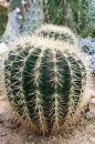 Free Two Big Cacti Stock Photos - 567423