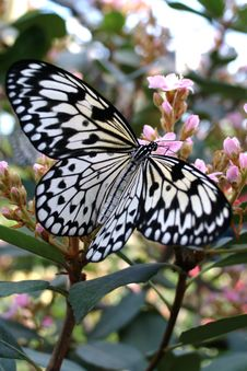 Free Butterfly Royalty Free Stock Images - 560029