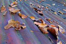 Free Leaves On Corroded Roof Royalty Free Stock Photos - 560278