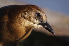 Free Bird Royalty Free Stock Image - 560556